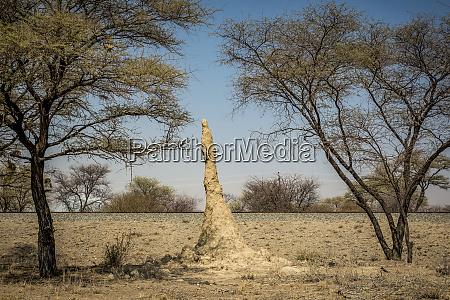 termite mound otjozondjupa region namibia
