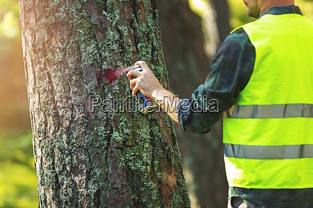 logging industry forestry engineer marking