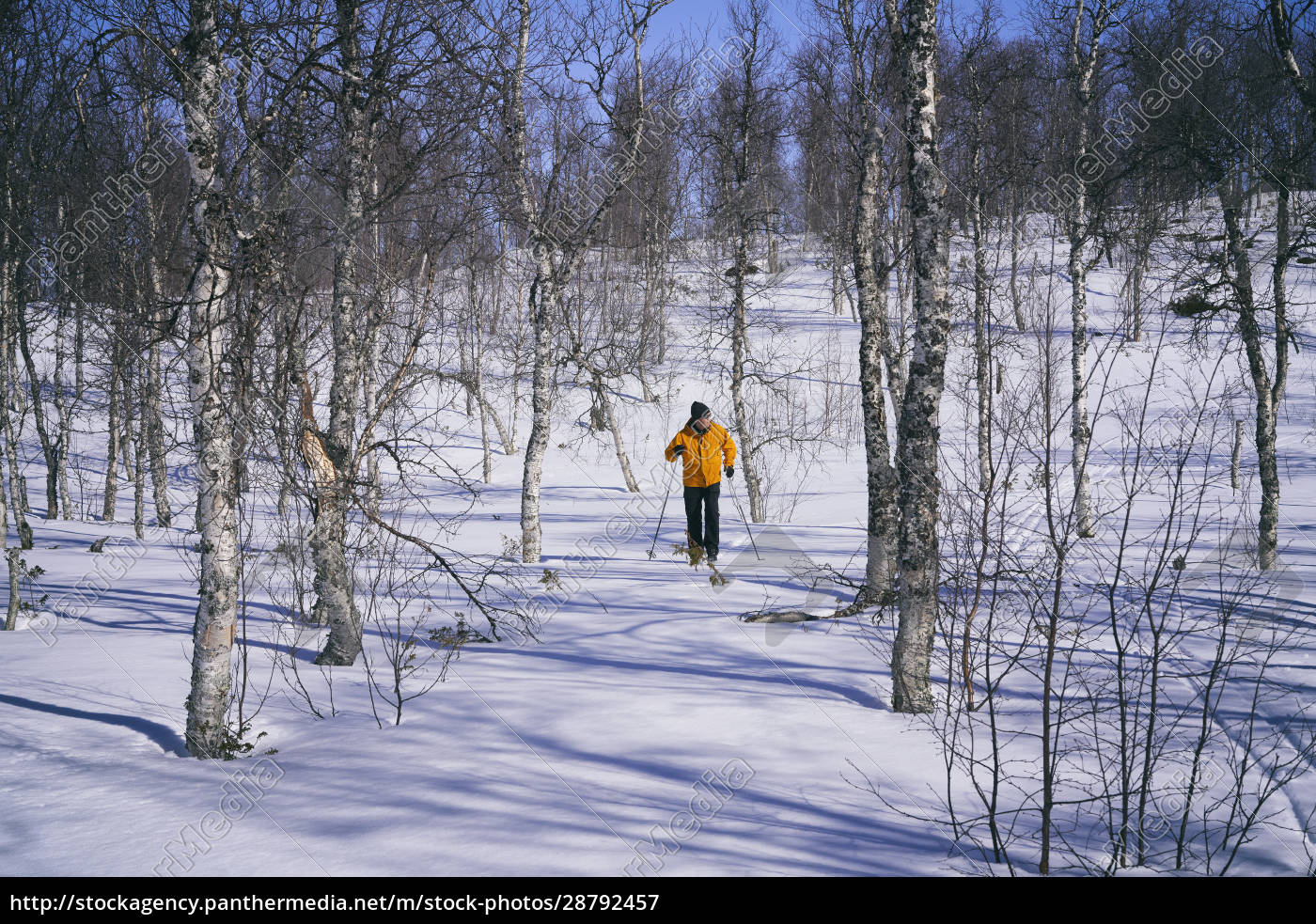 man, cross-country, skiing, in, vasterbottens, lan, - 28792457