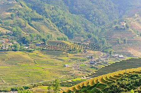 rice terraced fields in sapa