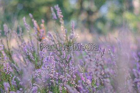 purple plants in the forest