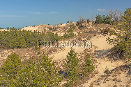 plant sucession on a sand dune