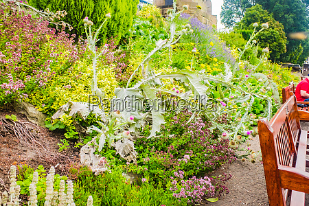 princes street gardens on summer day