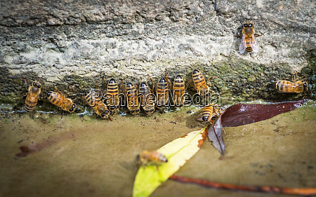 bees at a drinking spot