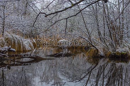 ruhige sumpflandschaft im winter