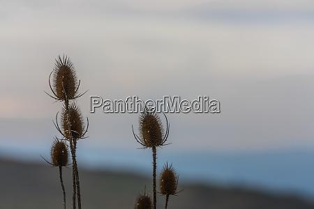 pflanze mit hintergrund detail