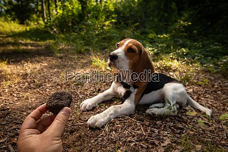 just picked black truffles