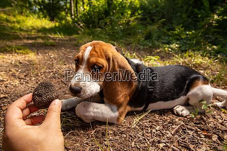 successful mushroom truffle hunting
