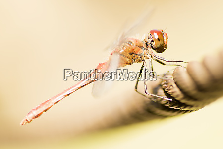 dragonfly damselfly insect