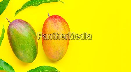 tropical fruit mango on yellow