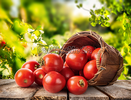 fresh tomato in basket