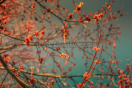 cherry blossom branches filling the frame