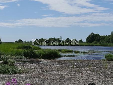 swampy lake shore summer