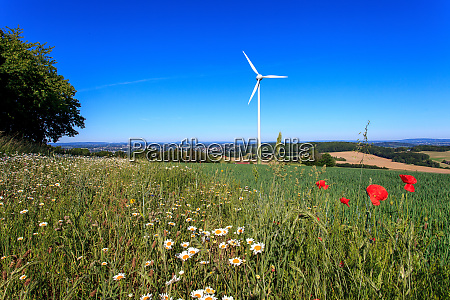 wind power and nature