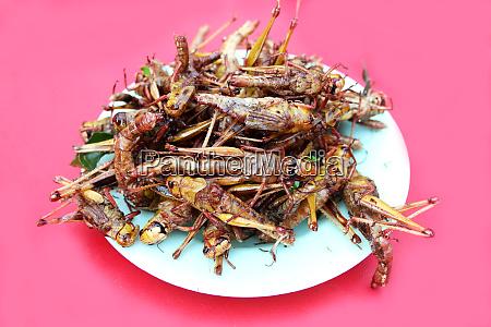 close up fried grasshopper or belalang