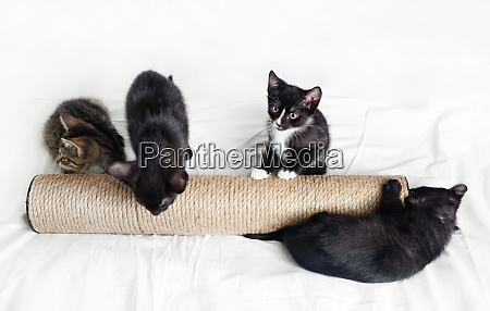 four kittens scratching post