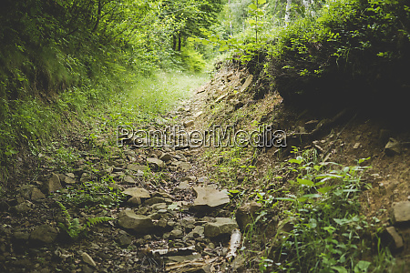 rocky path in a forest