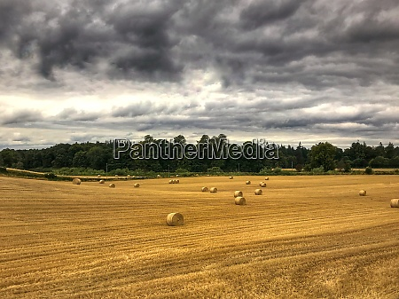 golden field under dramatic clouds