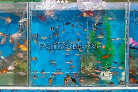 fish tank pets