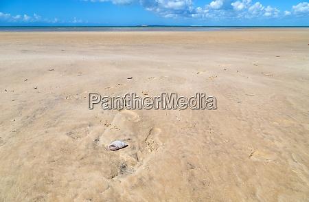 shell on the beach sand