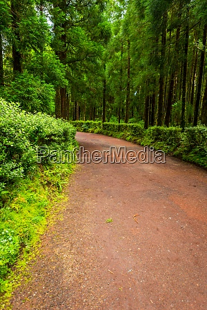 path in azorean forest