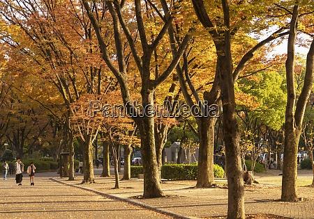 autumn colours in shirakawa park nagoya