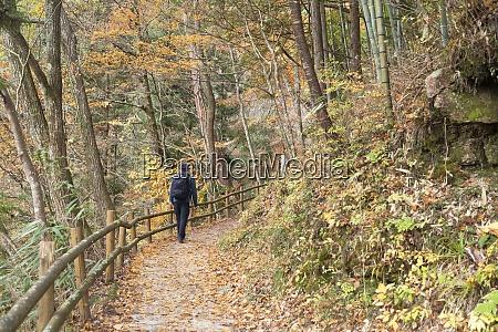 man hiking forest on nakasendo way