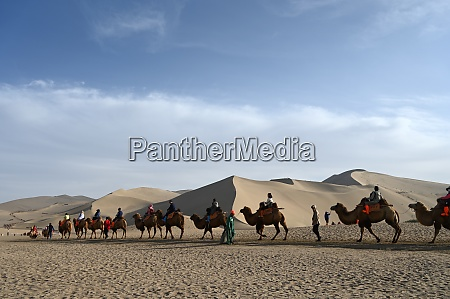 tourists on camels being led through