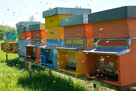 carniolan honey bee hives in the