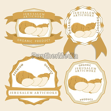 whole ripe vegetable jerusalem artichoke