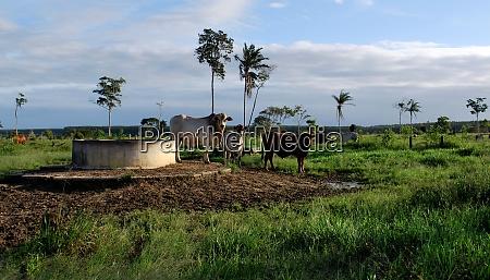 livestock farm in bahia
