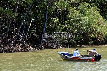 mangrove in southern bahia