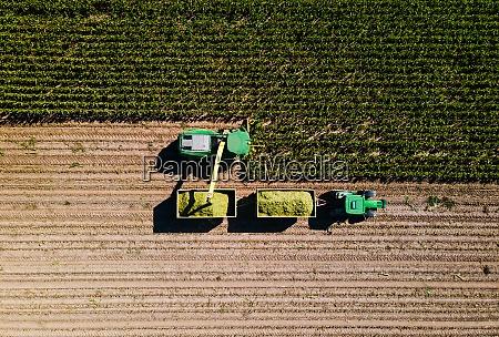corn harvest in the field seen
