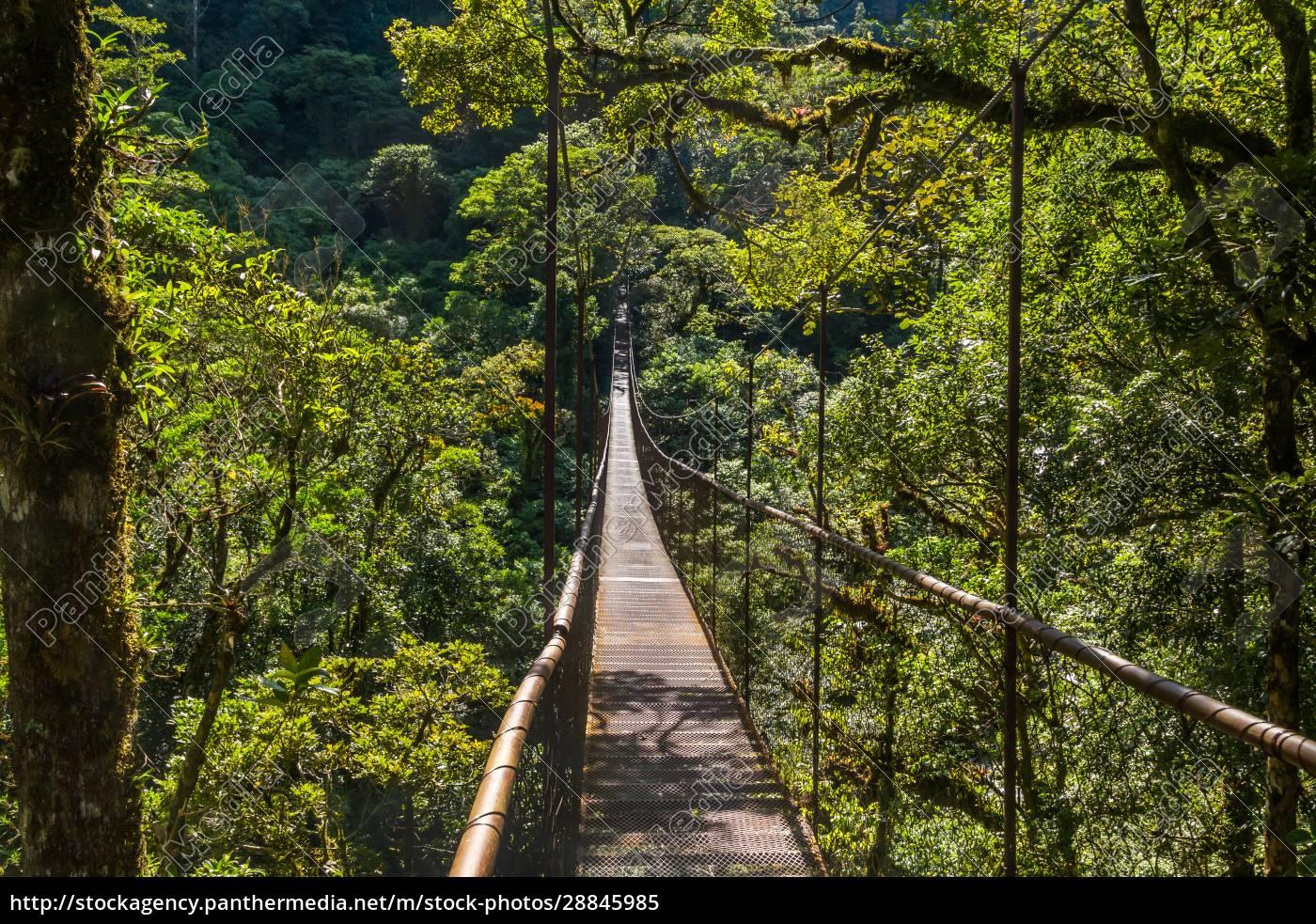 hanging, bridge, in, panama - 28845985