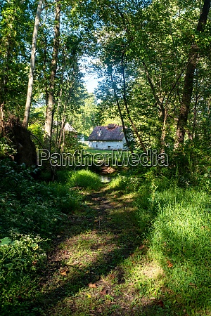 idyllic forest path leads to quaint