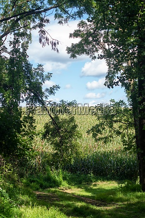 forest path opens onto idyllic field