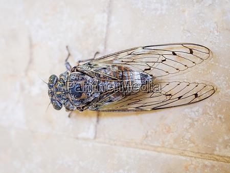 cicada on the floor