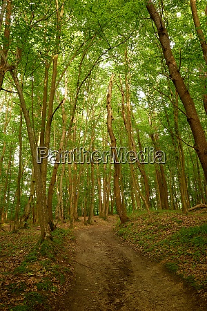 serene no people pathway in the