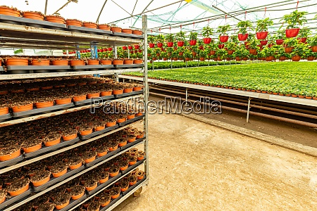 grow ornamental flowers
