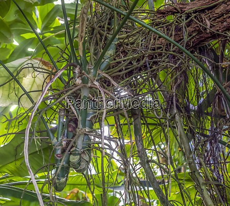 jungle vegetation closeup