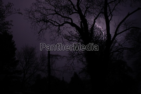 a lightining strike behind silhouetted trees