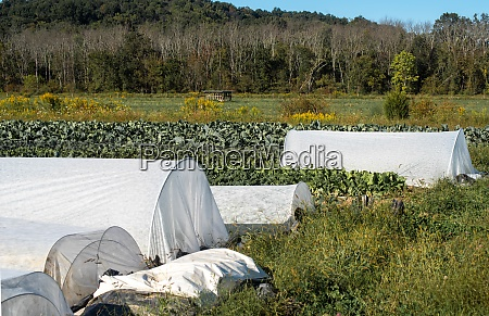 white hoop crop covers in idyllic