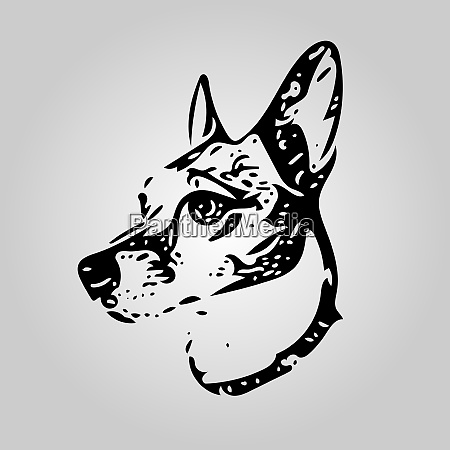 20200923-dogjackrussell1 - 28873797
