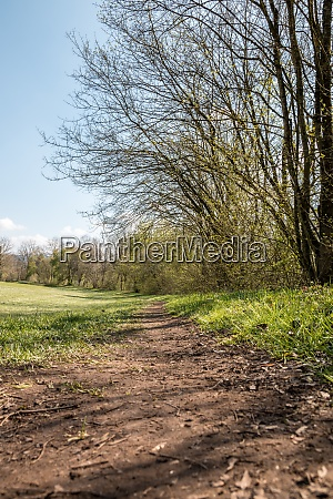 muddy woodland path through the green
