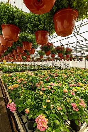 ornamental plants and flowers