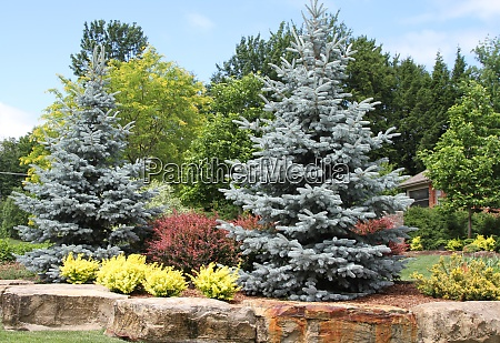 trees and shrubs lined with massive