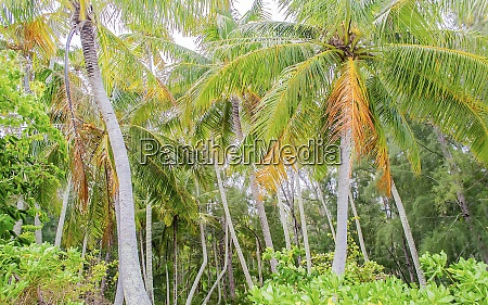 tropical forest french polynesia