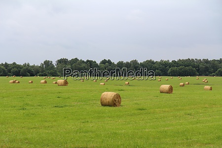 agricultural field with harvested hay