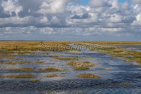 salt marsh at high tide in