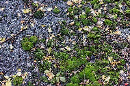 green moss in asphalt